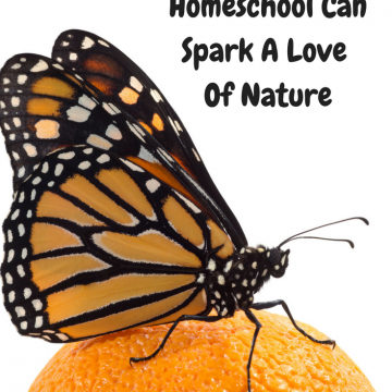 Butterflies In Homeschool Can Spark A Love Of Nature
