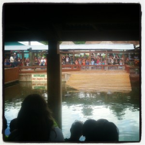 Watching the gators at Gatorland