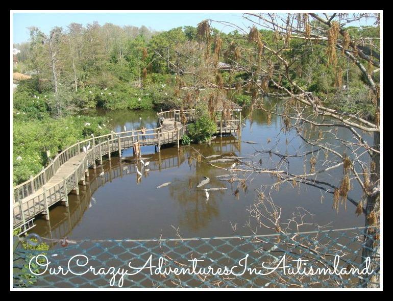 Finding Florida: Gatorland